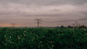 A photo of an agriculture field with power lines running across.